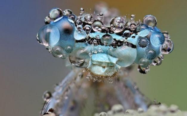 أجسام حشرات مغطاة بندى الماء