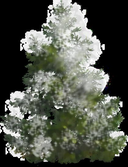 Pin Christmas Treepng on Pinterest