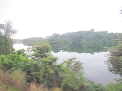 The peaceful lagoons of Gatun Lake from the line of The Panama Railway Company