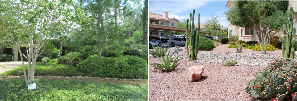 L to R: Comparing perennial peanut to cacti - Florida-Friendly and  xeriscape examples - UF/IFAS IrriGator: Florida-Friendly Landscapes: When Less