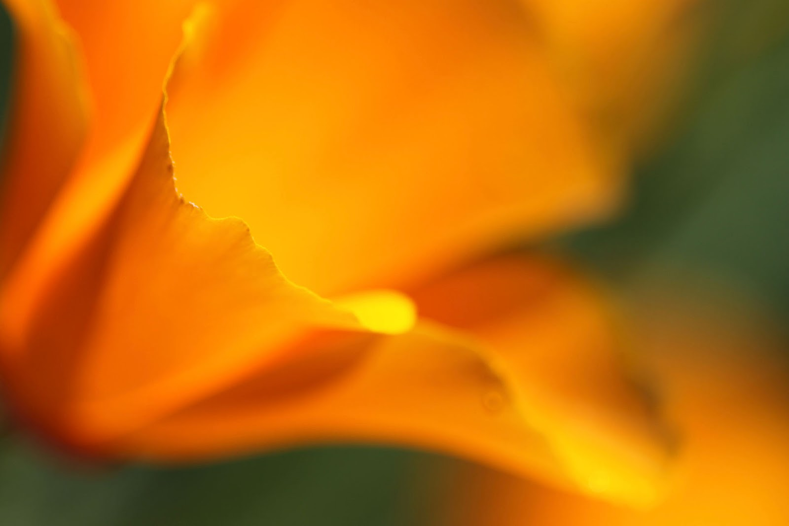 http://1.bp.blogspot.com/-894pCUQFLXE/T4AGCbdGmZI/AAAAAAAADnE/VVZwvZhVQvI/s1600/Golden_Bloom_by_Twinmama.jpg