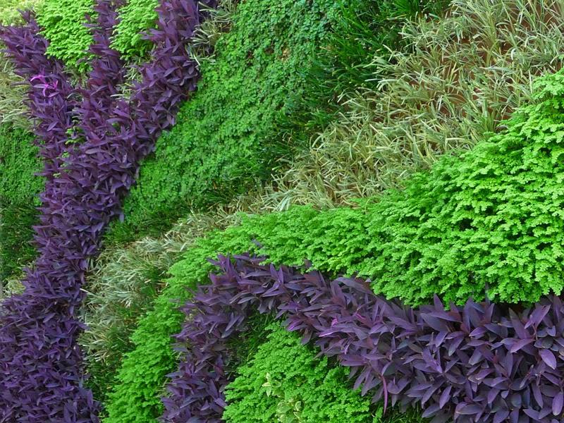 Galer a antes y despues fotos de jardines reales for Fotos de jardines verticales