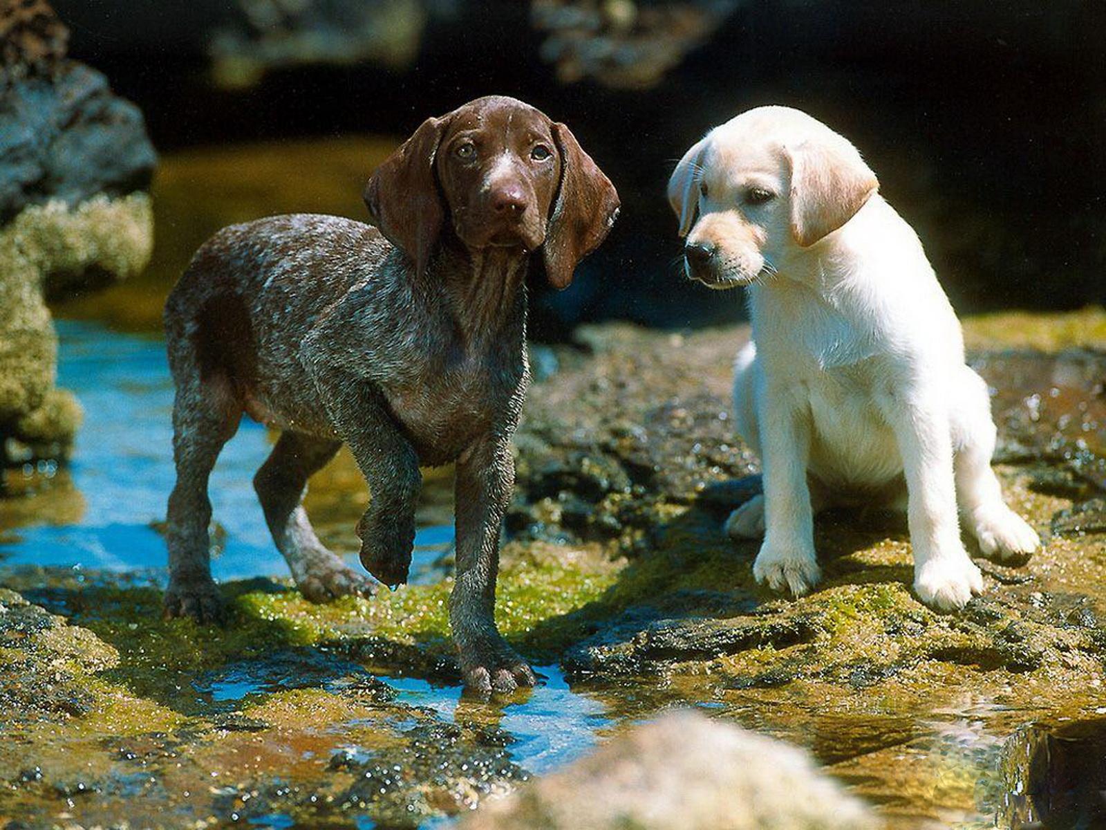 http://1.bp.blogspot.com/-89Hrq_4-wA8/Tyw8WmmALCI/AAAAAAAAA2k/6RZ6iPOZH8U/s1600/16-Cute+Dog+1600x1200.jpg