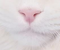Cats, cats, cats.