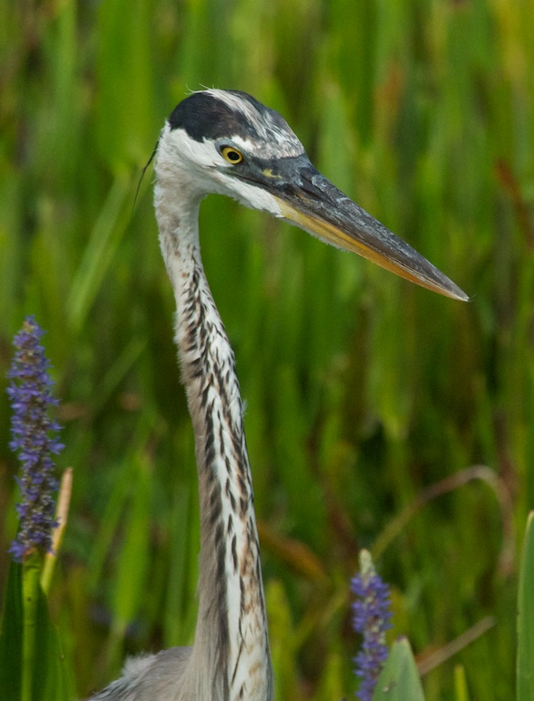 a wandering naturalist florida odds and ends