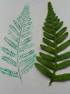 http://handbookofnaturestudy.blogspot.com.au/2012/05/our-spring-fern-nature-study.html