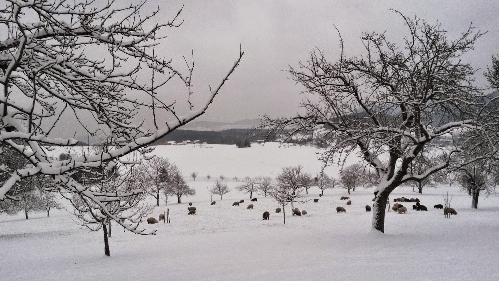 Eine Herde Schafe steht auf einer verschneiten Wiese