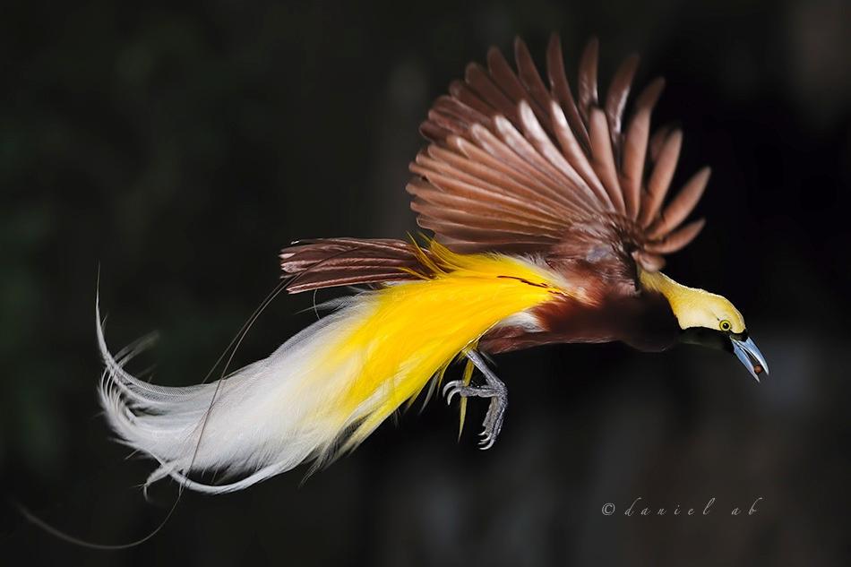 Exotic Birds Loiseau