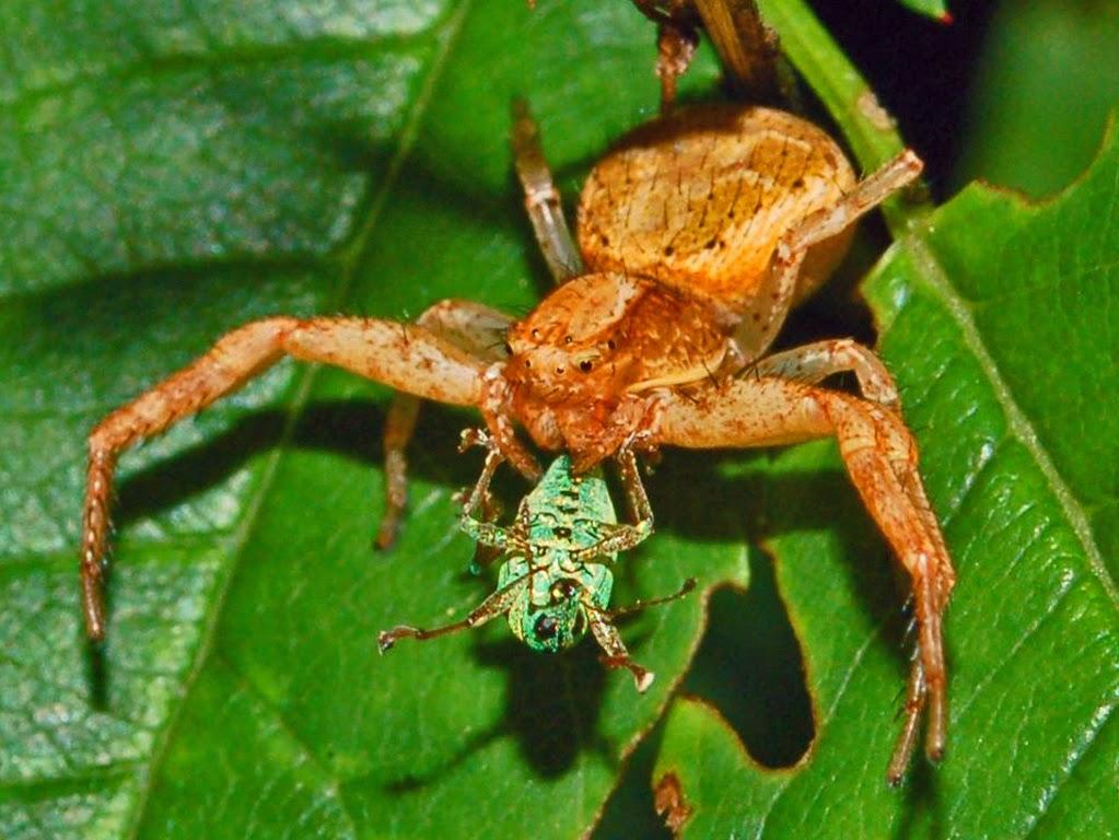 Amazon Rainforest Animals : The Crab Spider ~ Amazon ... - photo#5