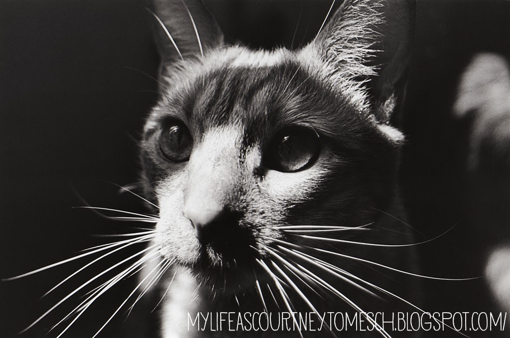 Black and White Photography Cruz Ginger Cat