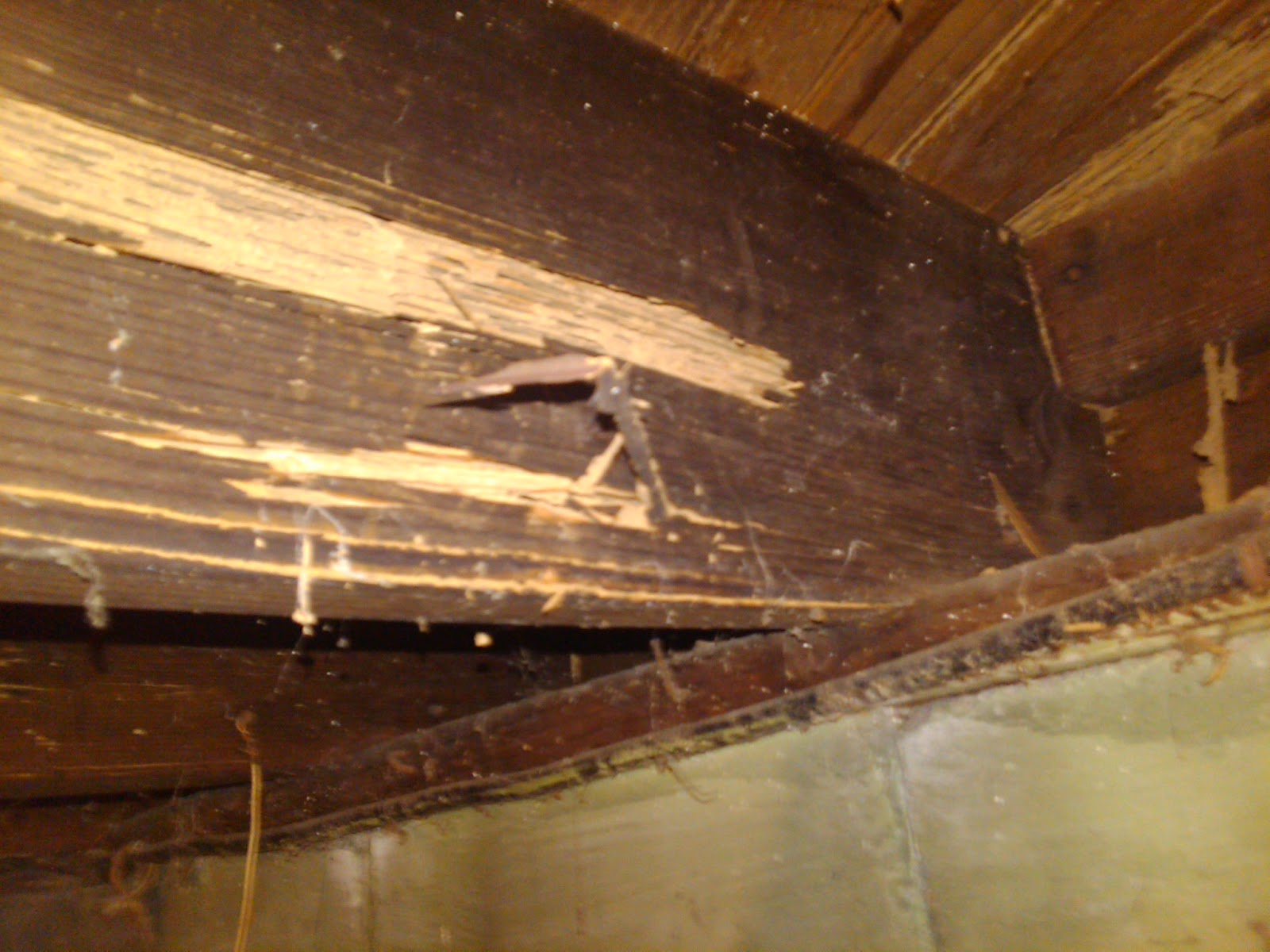 Signs of termite damage in drywall