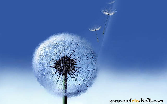 Free Galaxy S3 Stock Dandelion HD wallpapers download