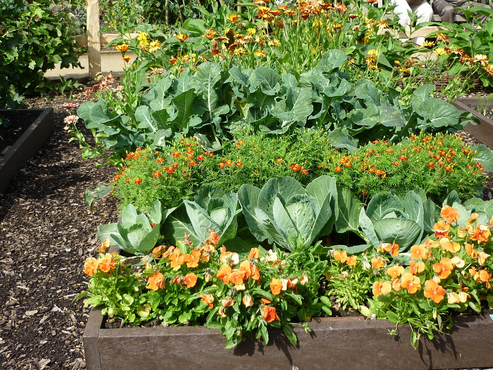Companion planting raised beds and square foot gardening on pinterest - Companion planting ...