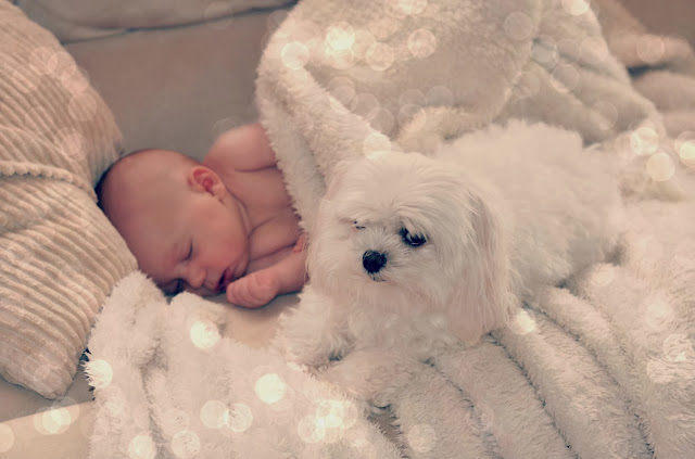 dog and baby sleeping together cute cuddly picture