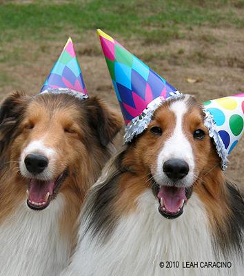 Funny Dogs Party