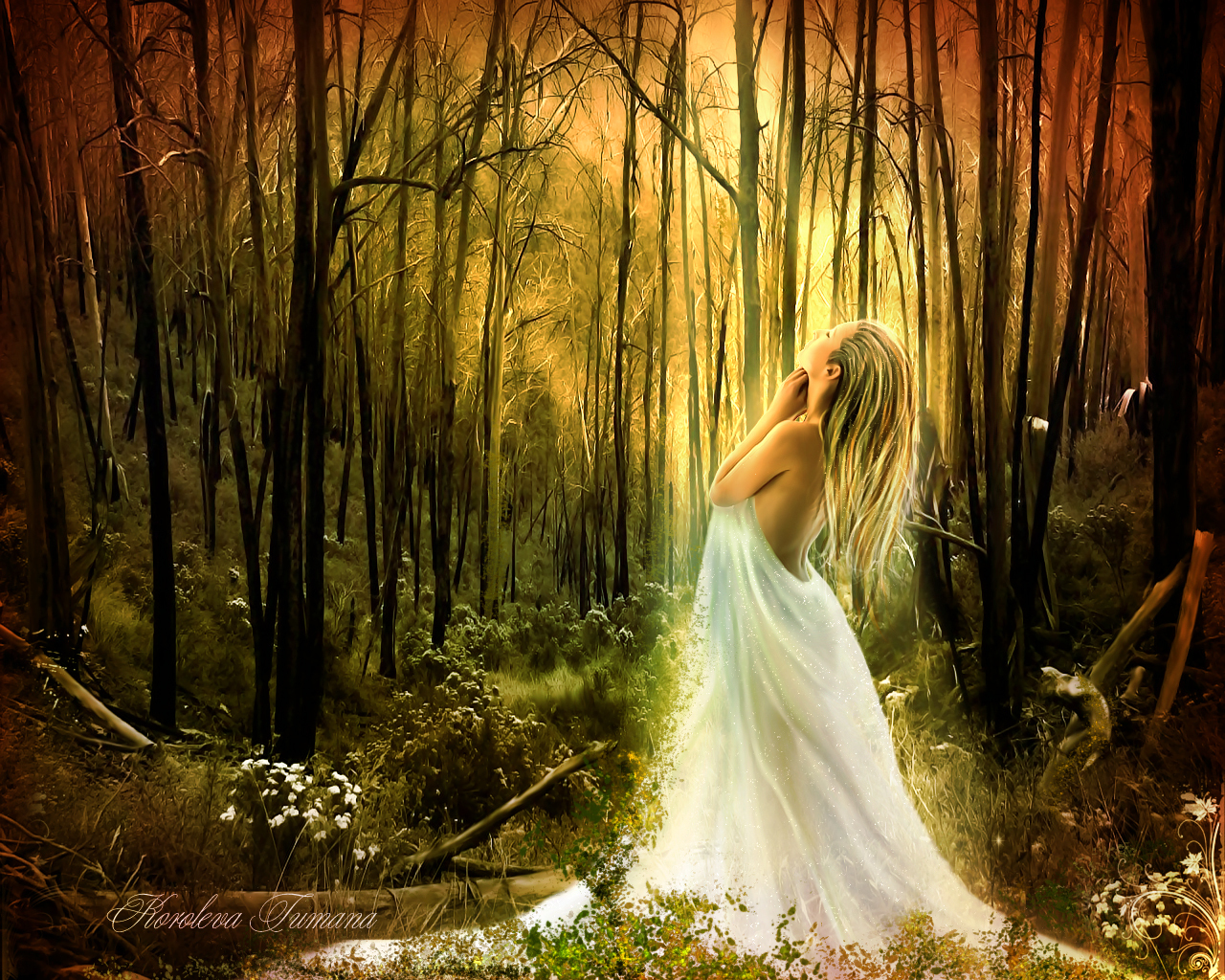 forest fairy wallpaper - photo #15