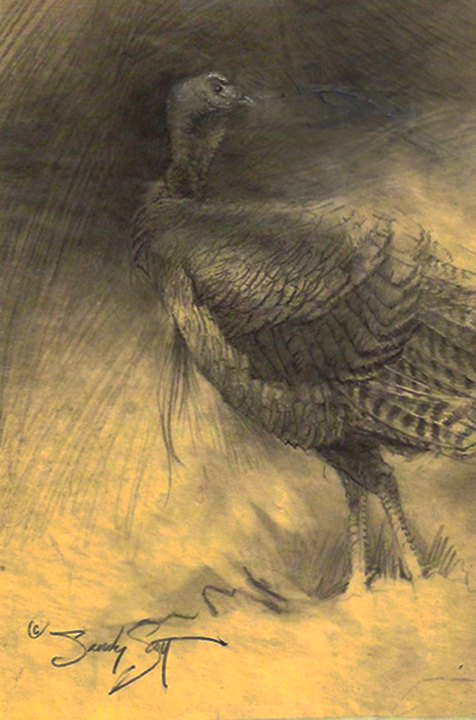Turkey bird anatomy