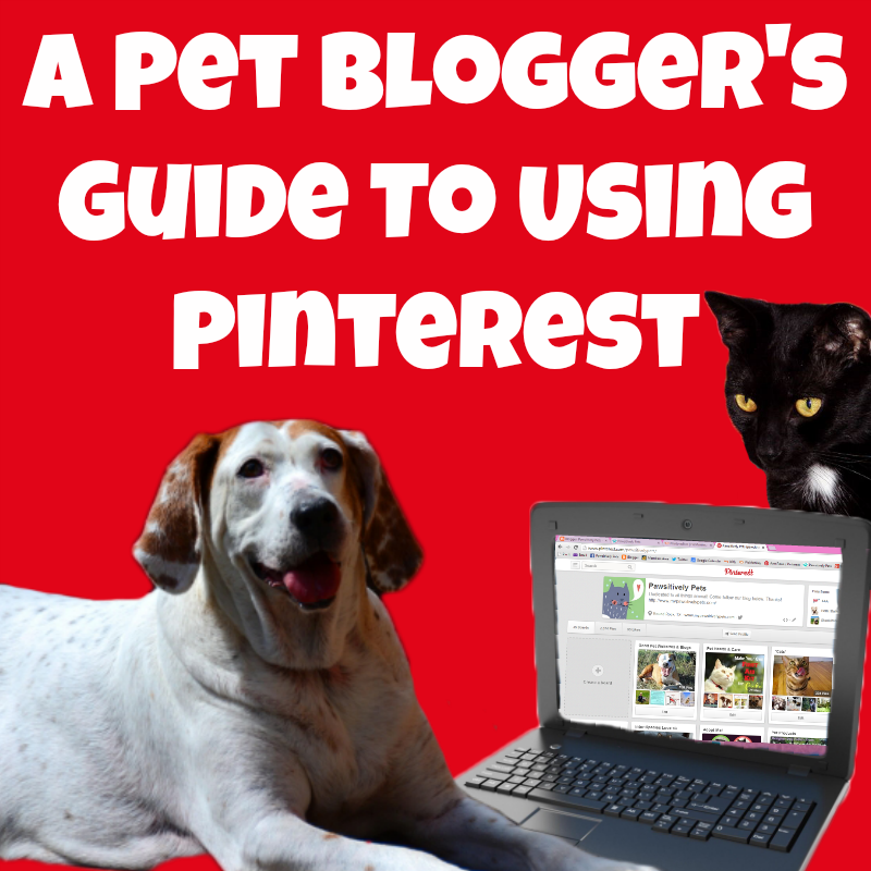 Pet Blogger's guide to using Pinterest - the basics
