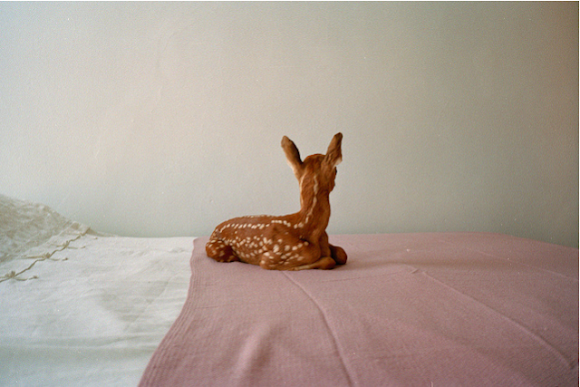 deer on bed