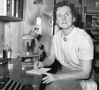 Mi guía e inspiración: bióloga Dra Rachel Carson