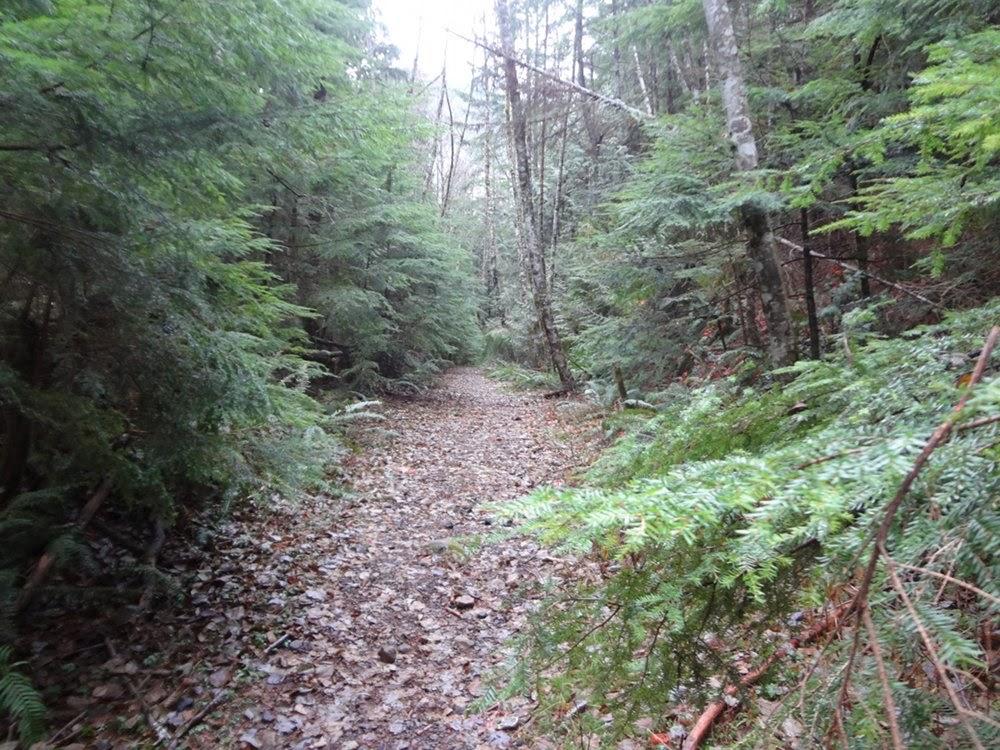 Hiking towards Brunswick Mountain in Lion's Bay, BC