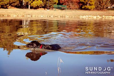 Mason swimming in lake