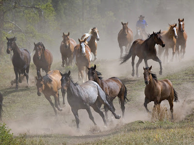 Brown Horses Running Free Desktop Wallpapers