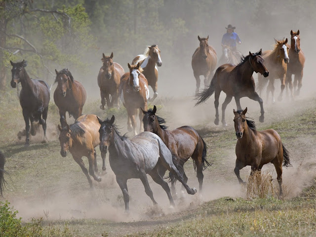 The Cat Running Horses Wallpapers For Desktop Backgrounds