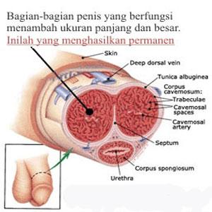 vakum sport usa, terapi pembesar penis, vakum penis usa