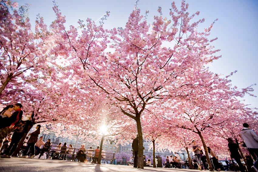 träd med blommor
