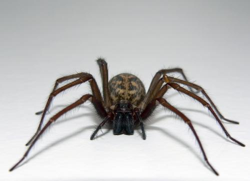 http://1.bp.blogspot.com/-8DrelxTFITs/TZcGfBuMYcI/AAAAAAAAB5I/K1yzjAYxyN8/s320/s_spider.jpg