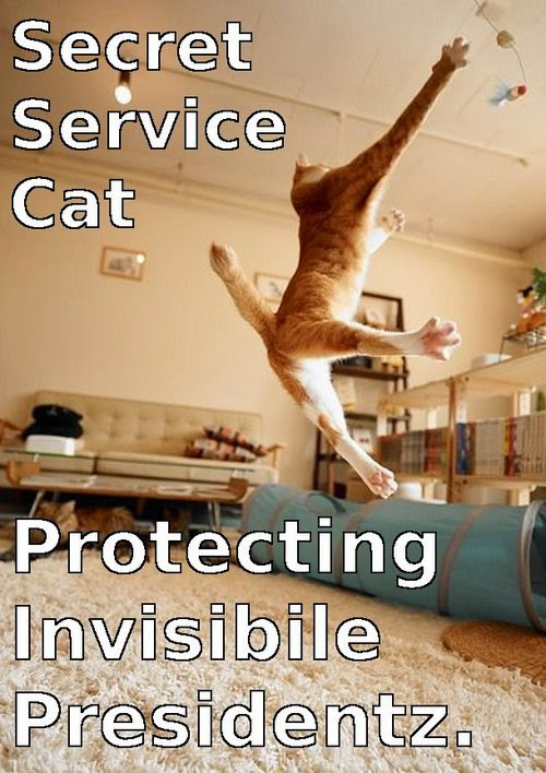 invisible cat meme secret service.
