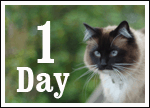 TOMORROW we walk for homeless cats and kittens!