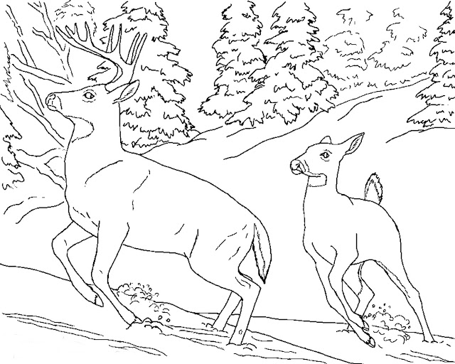 Realistic deer animal coloring pages for kids