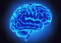 How Alzheimer's Destroys the Brain