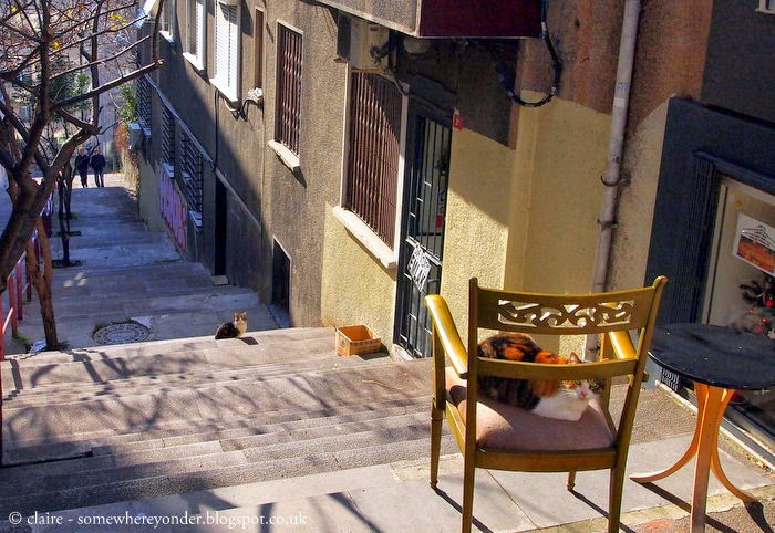 cats sunning themselves on the friendly streets of Istanbul