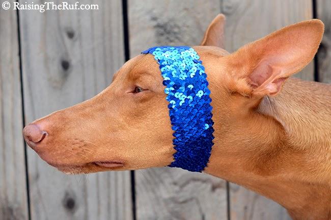 funny pharaoh hound