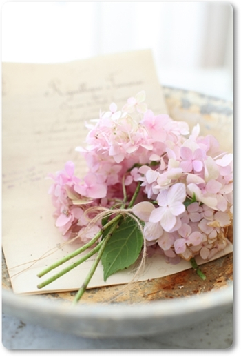 ljusrosa hortensia