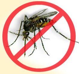 Instrucciones en caso de dengue