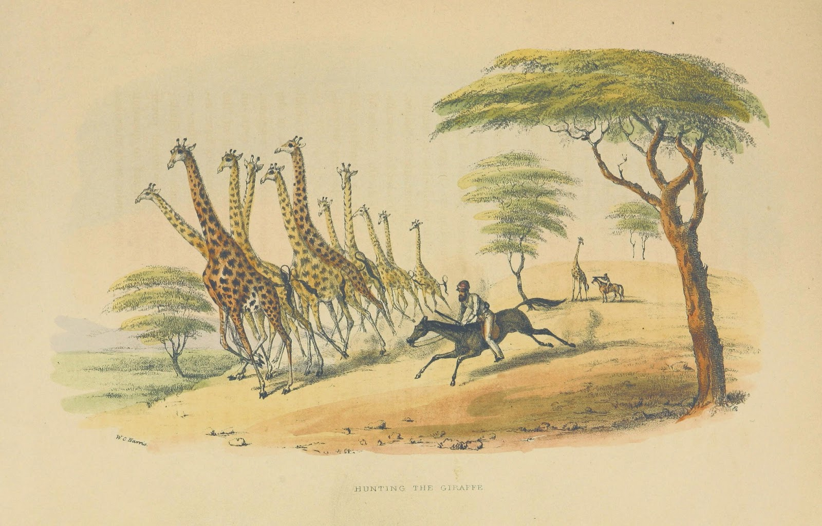 Free Vintage Art Prints - Classroom Visuals. - Montessori Nature