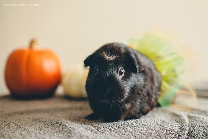 """guinea pig ballerina"""