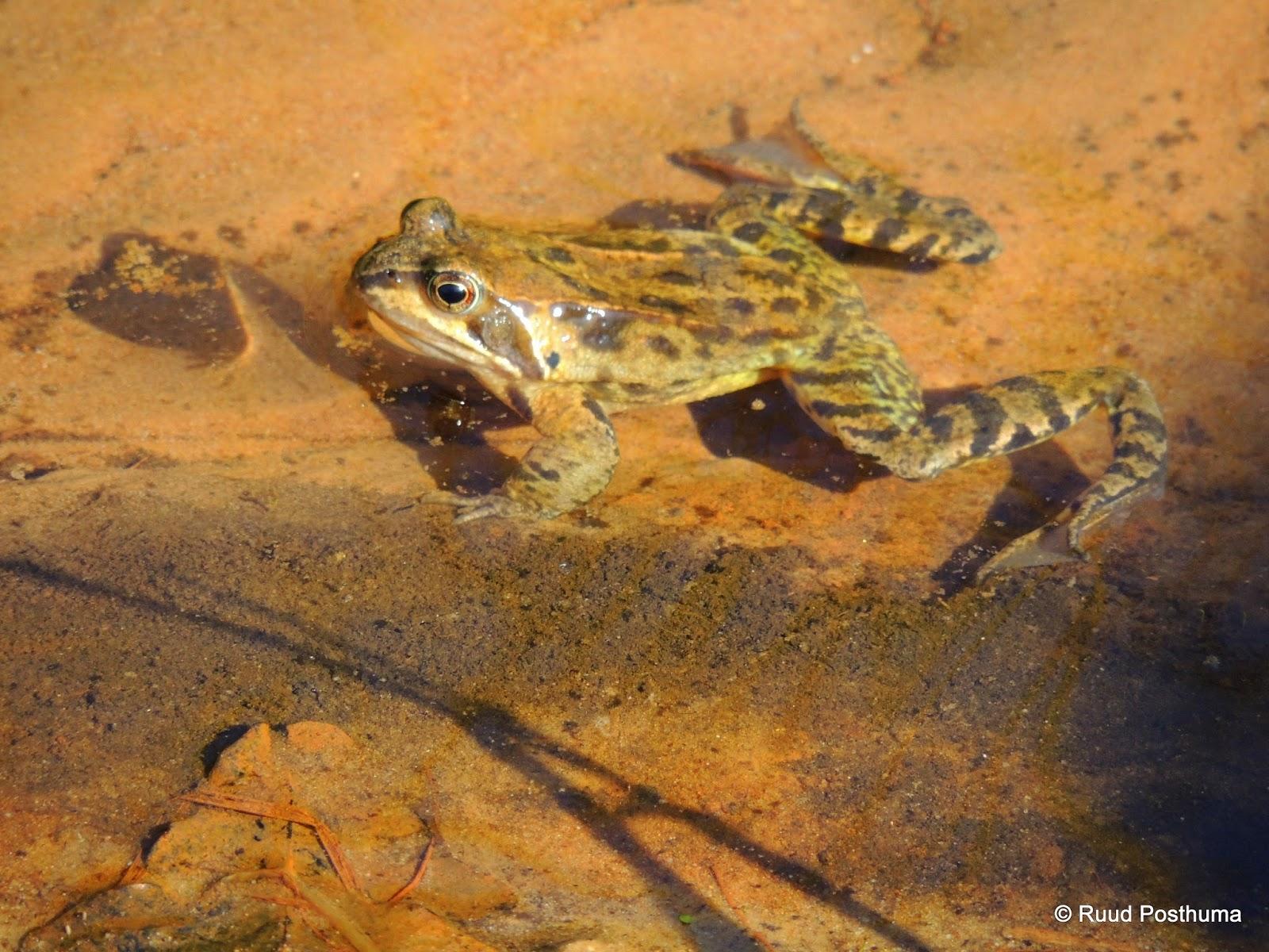 Ruud's natuurblog: april 2014