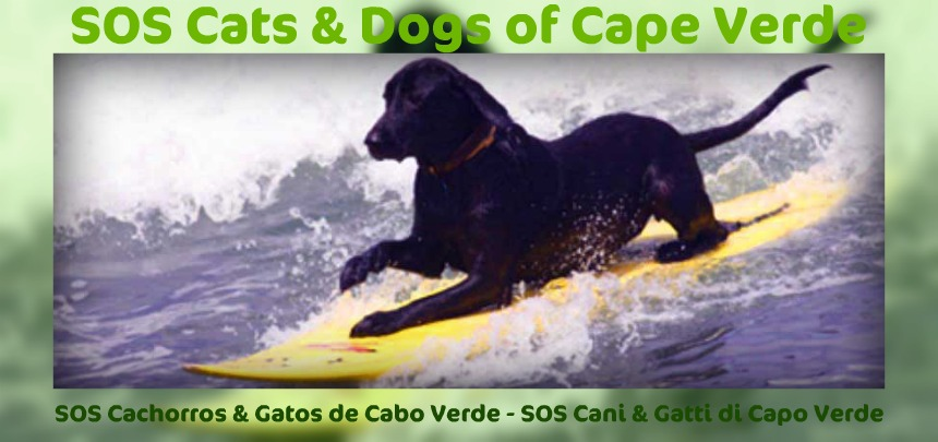 SOS Cats and Dogs of Cape Verde
