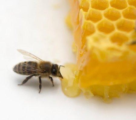 Mật ong - dưỡng chất, vị thuốc kỳ diệu