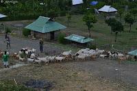 goats of garin farm