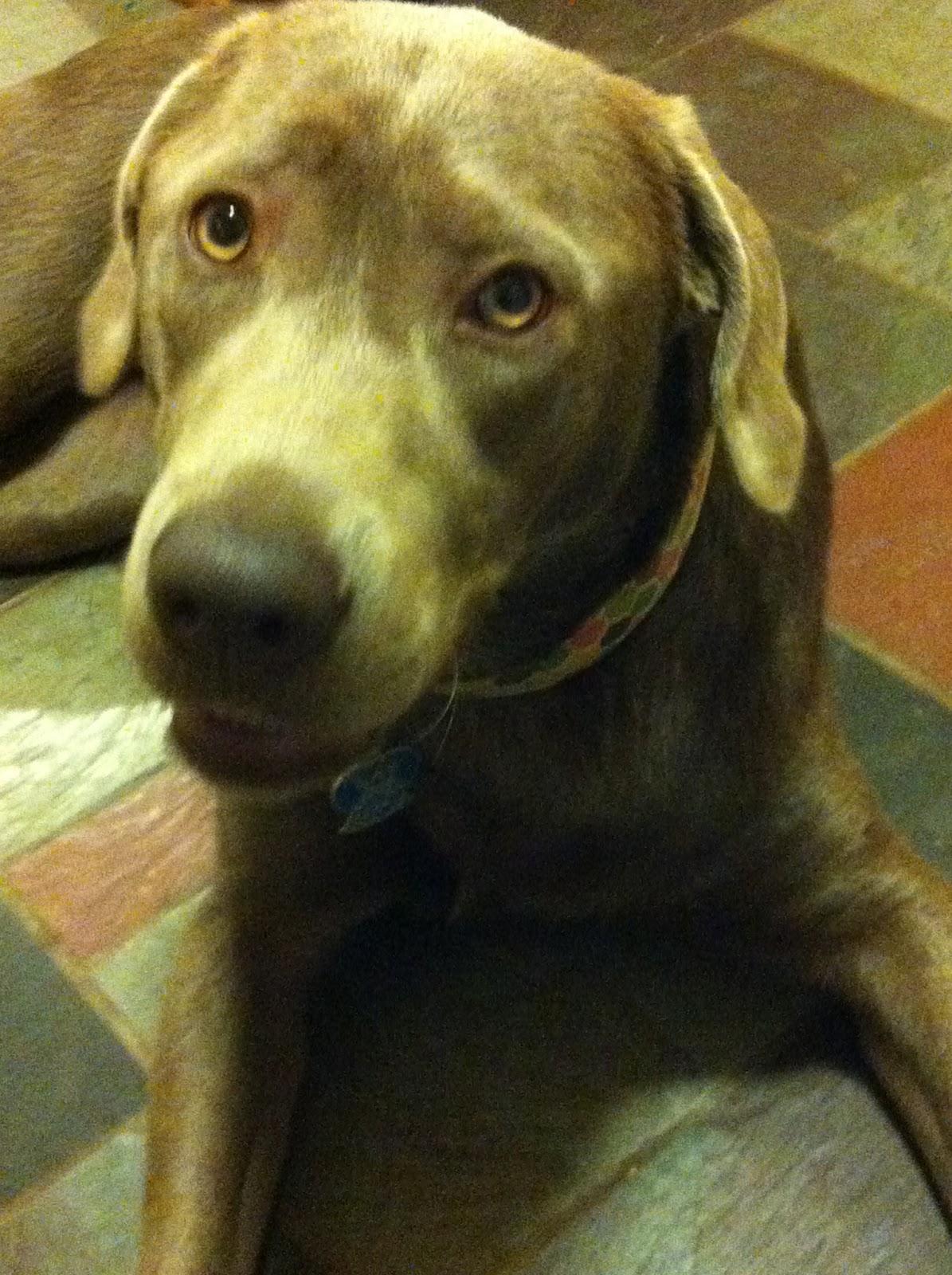 Dinner, a Dog & a Blog: Frozen Dog Treats