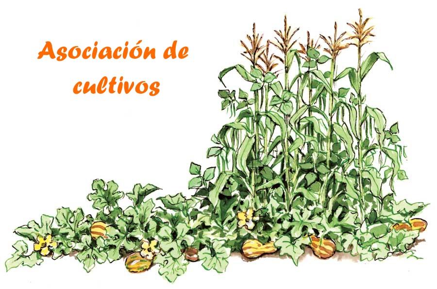 Huertas vecinas antu newen beneficios de la asociaci n de for Asociacion cultivos huerto urbano