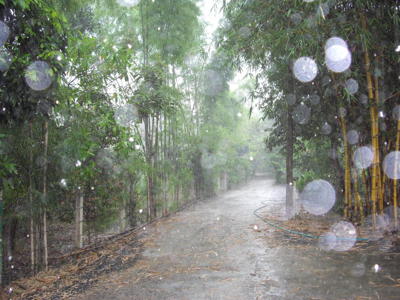 35 Beautiful Examples Of Rain Photography