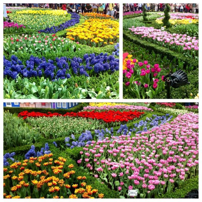 Festival Tulipmania