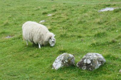 Oveja en las Highland